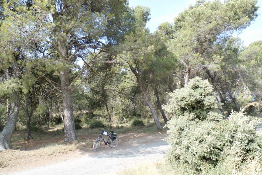 forest bike ride